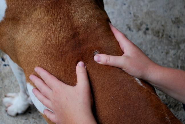 mains sur dos de chien