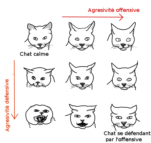 expessions faciales chat