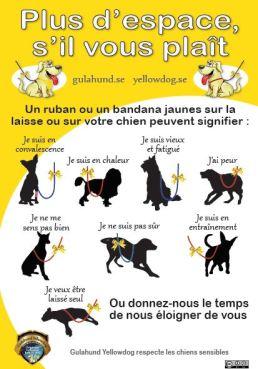 Signifiactions de la présence d'un ruban jaune sur la laisse d'un chien